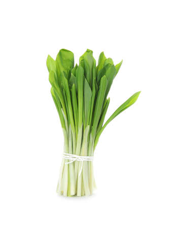 Bunch of wild garlic or ramson isolated on white background