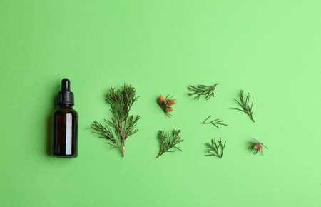 Little bottle with essential oil and pine branches on color background, flat lay