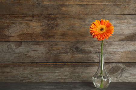 Beautiful bright gerbera flower in vase on table against wooden background. Space for text