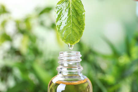 Essential oil dripping from mint leaf into glass bottle on blurred background, closeup 写真素材