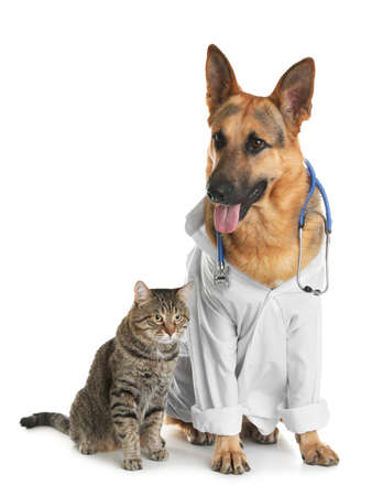 Cat and dog with stethoscope dressed as veterinarian on white background