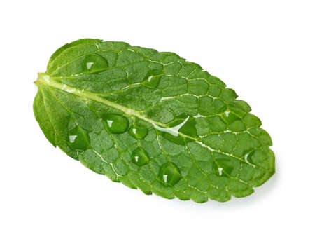 Wet leaf of fresh mint isolated on white, top view