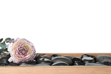 Wooden tray with spa stones and ranunculus flower against white background