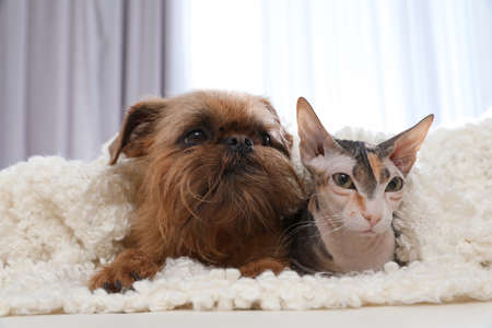 Adorable cat looking into camera and dog together on sofa at home. Friends forever Stock Photo