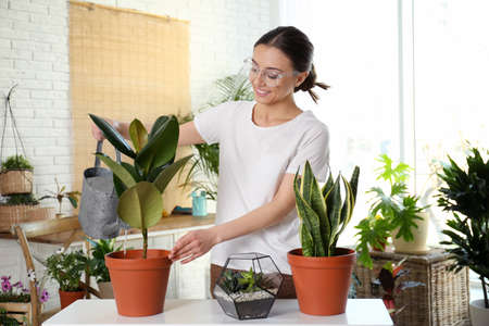 Young woman watering potted plant at home Stock Photo