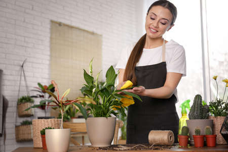 Young woman taking care of potted plants at home Standard-Bild - 124988533
