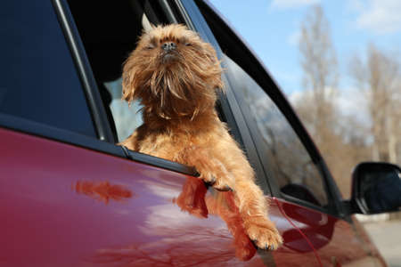 Adorable little dog looking out from car window, low angle view. Exciting travel