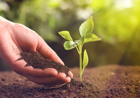 Farmer with handful of soil near young seedling on blurred background, closeup. Space for text Stock Photo