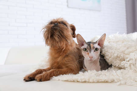 Adorable cat looking into camera and dog together on sofa at home. Friends forever