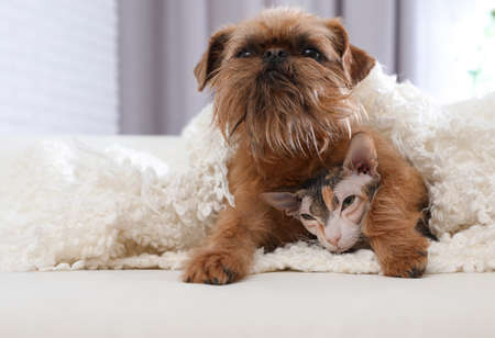 Adorable dog looking into camera and cat under blanket together on sofa at home. Friends forever