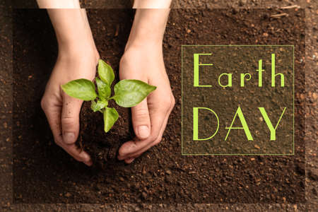 Woman holding green seedling on soil, top view. Earth Day Stock Photo - 124878390
