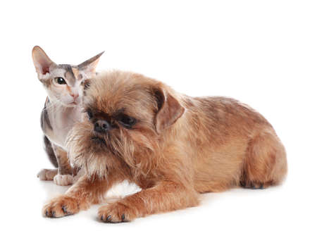 Adorable dog and cat together on white background. Friends forever Фото со стока