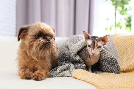 Adorable dog and cat together on sofa at home. Friends forever