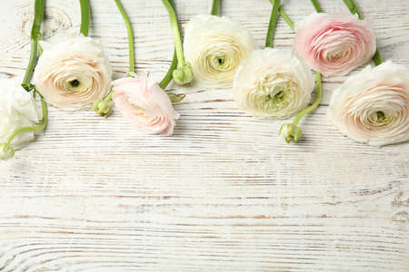 Beautiful ranunculus flowers and space for text on wooden background Banco de Imagens