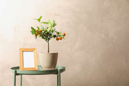 Potted citrus tree and empty frame on table against color background. Space for text Standard-Bild - 124990649