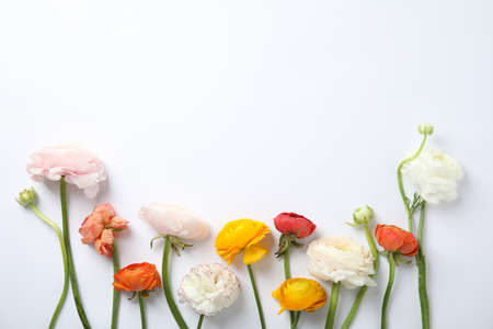 Beautiful spring ranunculus flowers on white background, top view Imagens