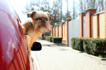 Adorable little dog looking out from car window, space for text. Exciting travel