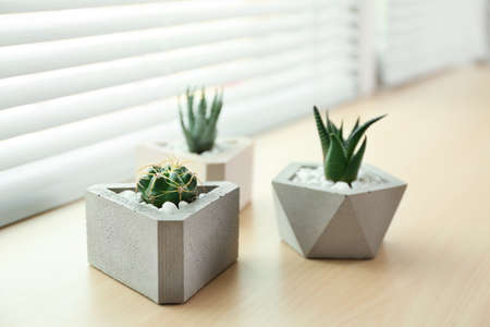 Window with blinds and potted plants on sill