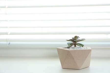 Window with blinds and potted plant on sill, space for text