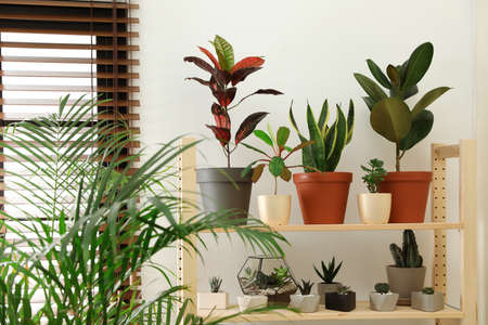 Stylish room interior with different home plants Imagens