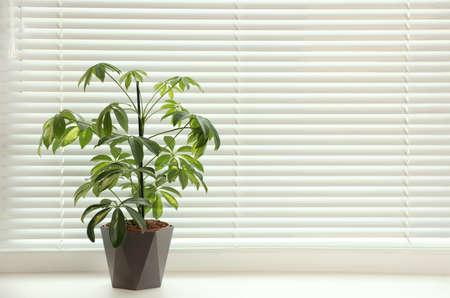 Schöne Topfpflanze auf der Fensterbank in der Nähe von Jalousien, Platz für Text