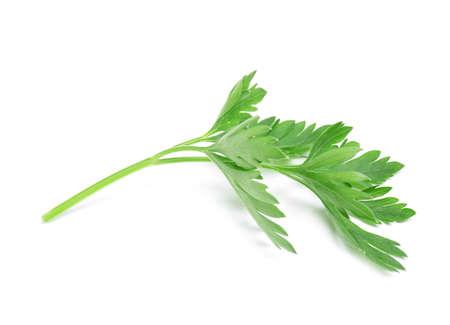 Leaves of fresh tasty parsley on white background Stock Photo - 124978222