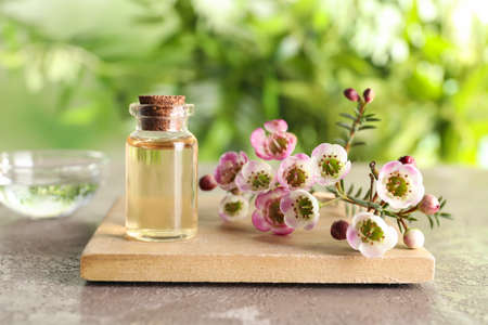 Composition with bottle of natural tea tree oil and plant on table against blurred background