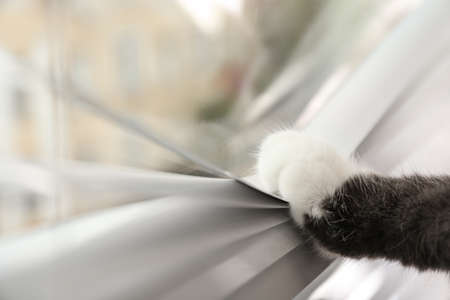 Cute cat opening Venetian window blinds with paw, closeup. Space for text