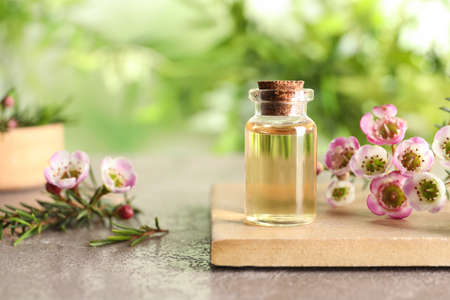Composition with bottle of natural tea tree oil and plant on table against blurred background, space for text Banco de Imagens