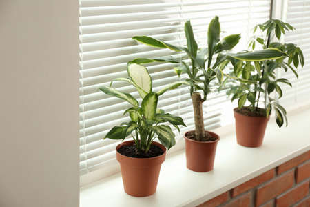 Different potted plants on sill near window blinds