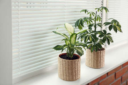 Different potted plants on sill near window blinds. Space for text