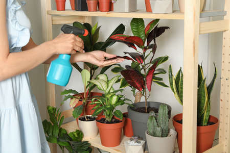 Woman spraying indoor plants near wall at home, closeup