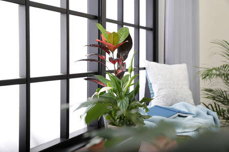 Different potted plants, blanket, book and pillow on window sill at home Standard-Bild - 124988660