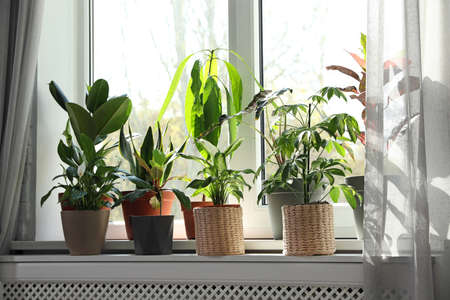Different green potted plants on window sill at home Standard-Bild - 124989557