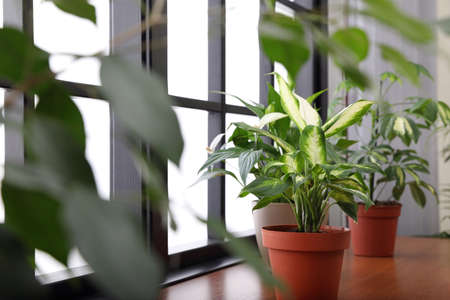 Different green potted plants on window sill at home Standard-Bild - 124990098