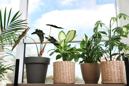 Different green potted plants near window at home Standard-Bild - 124990817