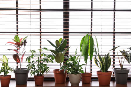 Different green potted plants on window sill at home Imagens