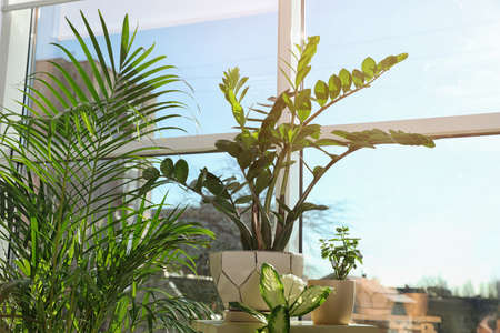 Different green potted plants near window at home Banco de Imagens