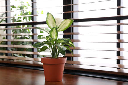 Green potted plant on window sill at home. Space for text Imagens