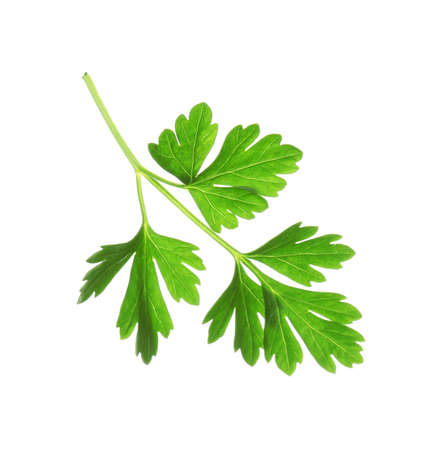 Leaves of fresh tasty parsley on white background, top view
