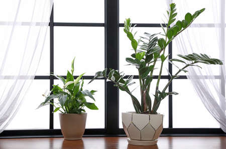 Different green potted plants on window sill at home Standard-Bild - 124992357