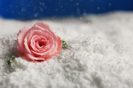 Beautiful rose on snow against blue background, space for text Archivio Fotografico - 124992436
