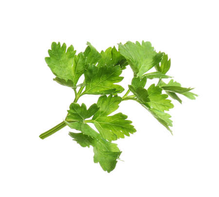 Leaves of fresh tasty parsley on white background