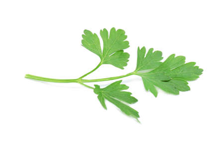 Leaves of fresh tasty parsley on white background