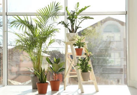 Different green potted plants near window at home Standard-Bild - 124992745