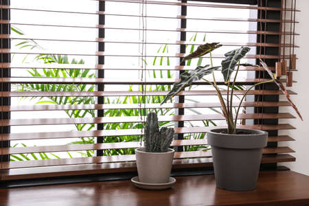 Different green potted plants on window sill at home. Space for text