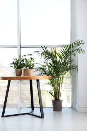Different green potted plants near window at home Standard-Bild - 124992787