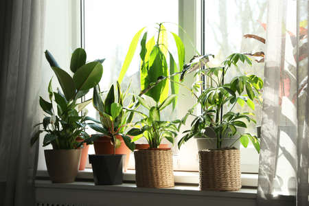 Different green potted plants on window sill at home Banco de Imagens