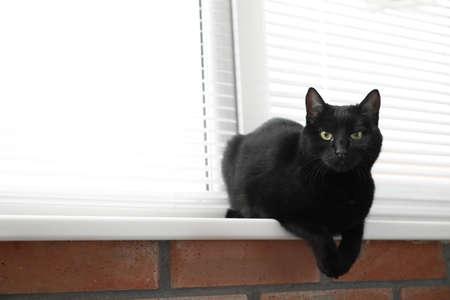 Schattige zwarte kat in de buurt van raam met jaloezieën binnenshuis. Ruimte voor tekst Stockfoto
