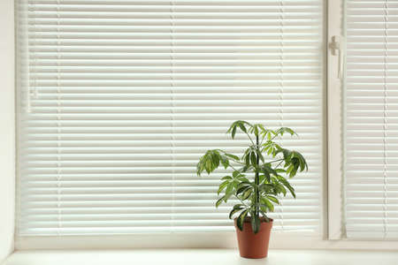 Beautiful potted plant on sill near window blinds, space for text
